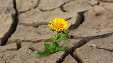 Photo of Takové sucho jsme 500 let nezažili. Obce řeší, jak vůbec přežijí léto